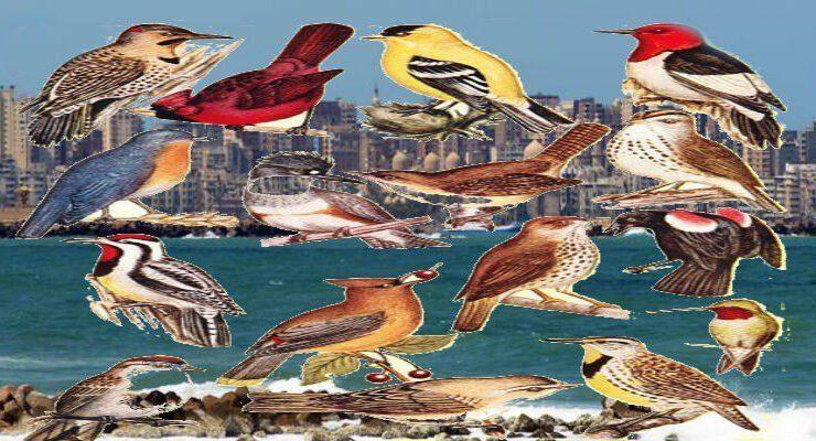 تاريخ نفوق الطيور في مصر