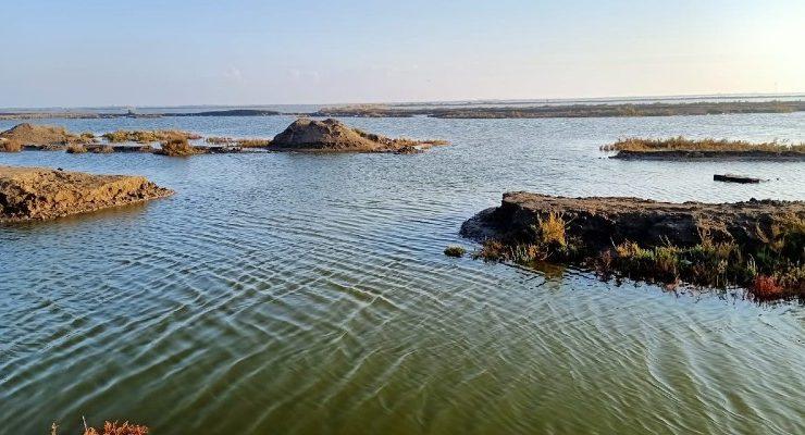 في المنزلة ............................ حين غادر السمك مزارعه إلى البحر