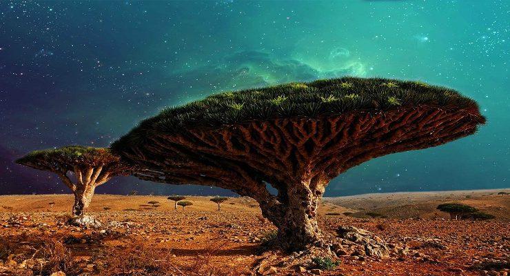 شجرة دم الأخوين