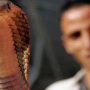 الثعابين في مصر