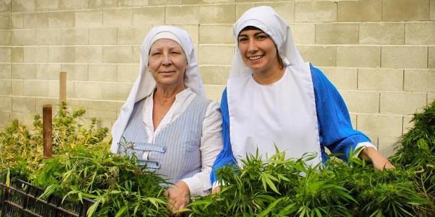 راهبات يعملن في زراعة الحشيش