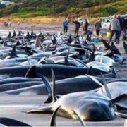 انتحار الدلافين