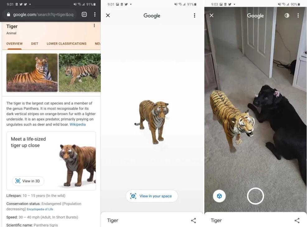 خاصية جوجل 3D Animals ... ما هي وكيفية استخدامها والتقاط الصور والفيديو بها