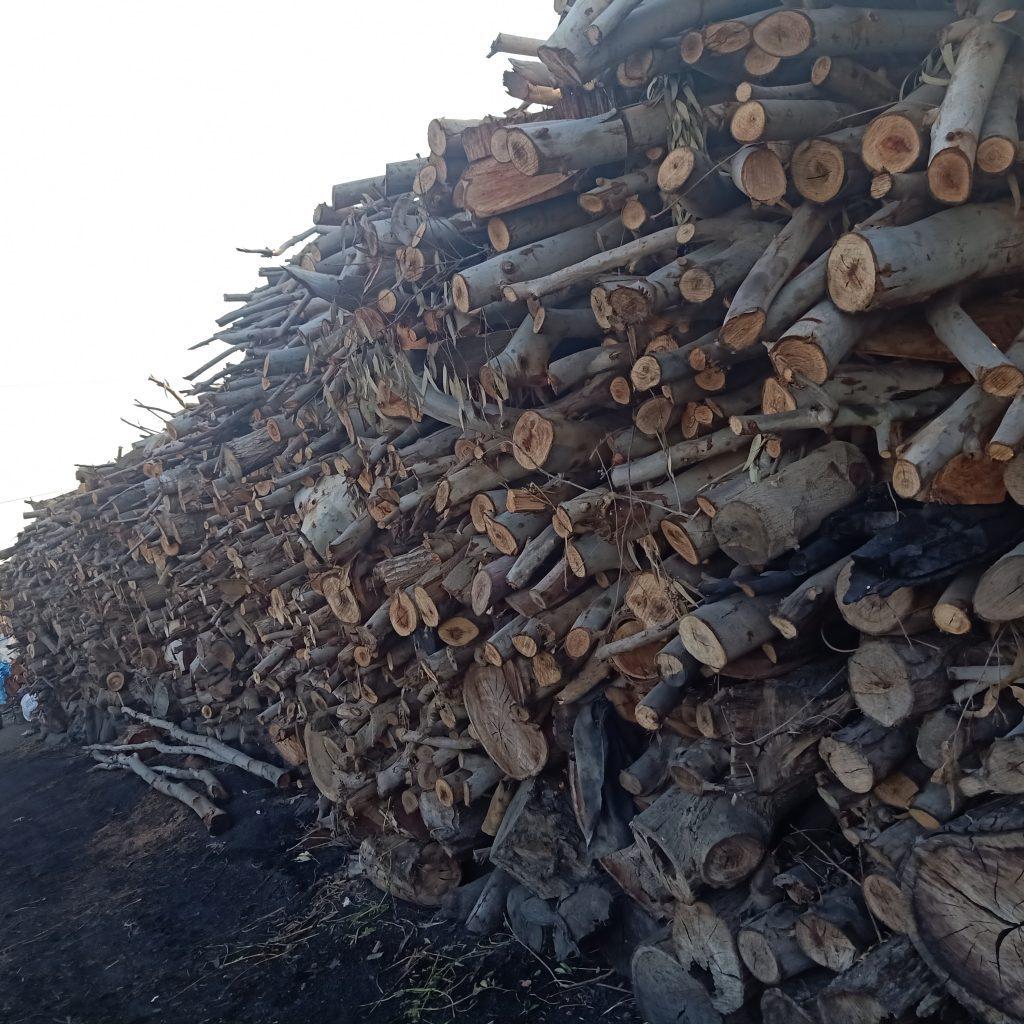 قطع أشجار