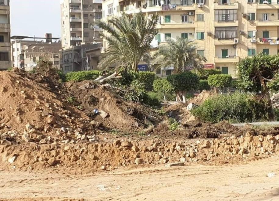 قطع الأشجار في مصر الجديدة