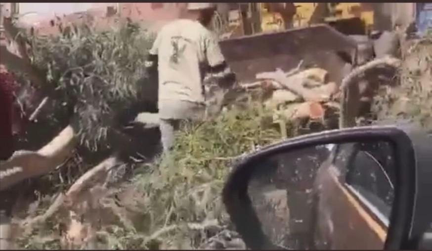 الاهالي يقطلعون الأشجار على طريق ابو صير