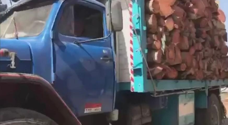 نقل الأشجار بعد اقتلاعها