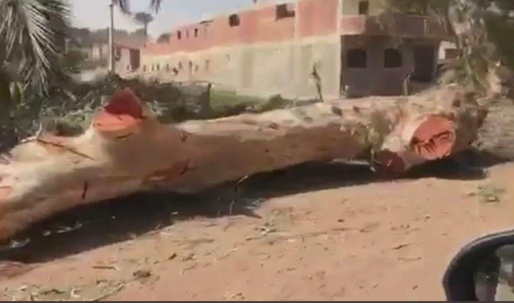 قطع الأشجار على طريق ابو صير