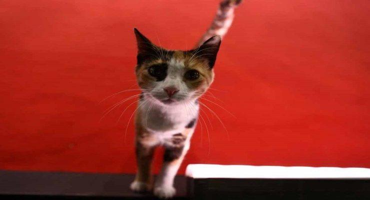 قطة مهرجان السينما
