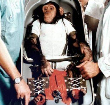 الشمبانزي