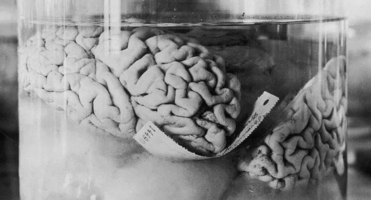 العقول